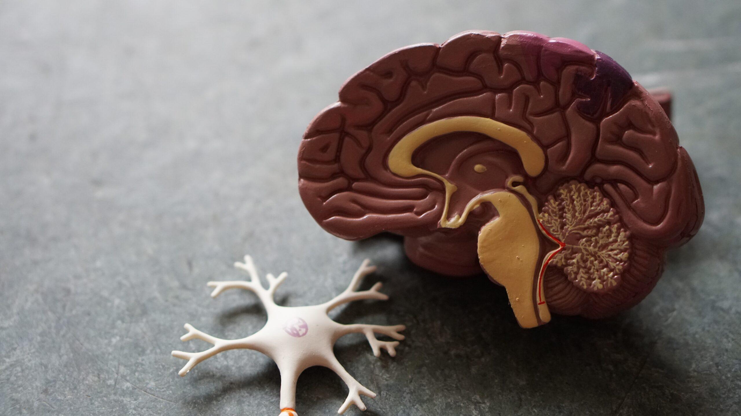 Wat kan je nu doen om straks niet dement te worden?